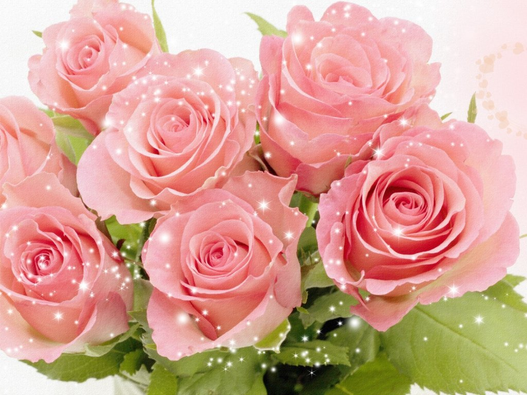 обои для рабочего стола розы красивые во весь экран № 233152  скачать